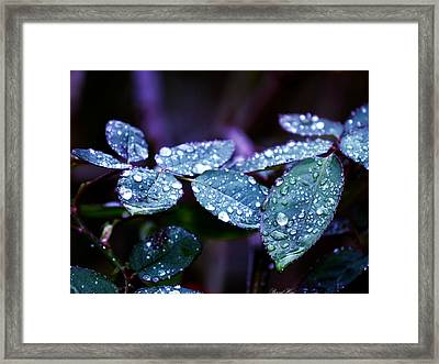 Pearls Of Nature Framed Print