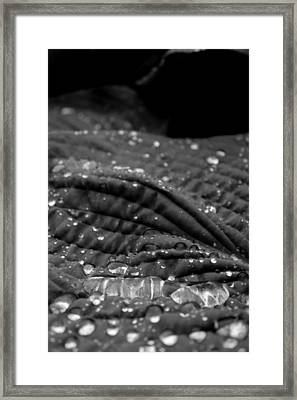 Pearly 2 Framed Print