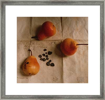 Pears And Ammonites On Paper Framed Print by Elspeth Ross
