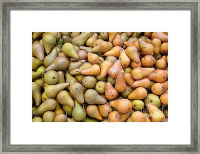 Pears At The Harvest Framed Print