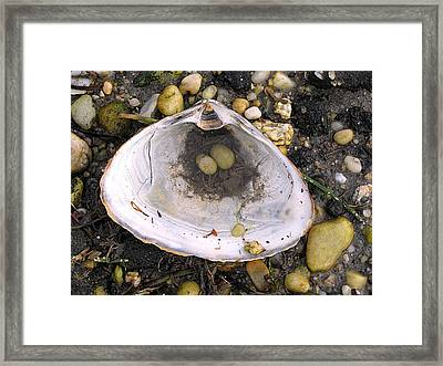 Pebbles In A Shell Framed Print by Colleen Kammerer