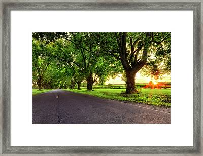 Framed Print featuring the photograph Pecan Alley Sunrise - Scott Arkansas - Landscape by Jason Politte