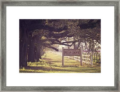 Pecan Grove  Framed Print