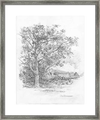 Pecan Tree Framed Print