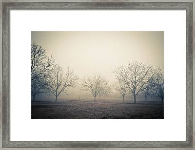 Pecan Trees Framed Print