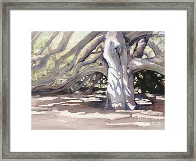 Pechanga Great Oak Framed Print