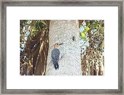 Pecking And Hopping Framed Print