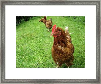 Framed Print featuring the photograph Pecking Order by Rebecca Wood