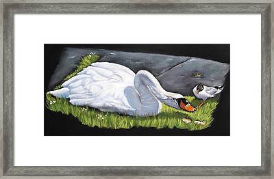 Pecking Order Framed Print by Vanda Luddy