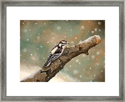 Pecking Through Rain Sleet And Snow Framed Print