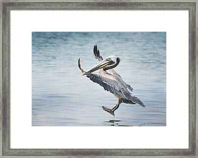 Pedal To The Metal Framed Print by Fraida Gutovich