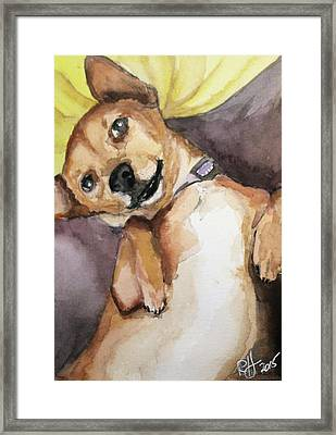 Pedro The Chi-weenie Framed Print