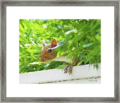 Peek-a-boo Gray Squirrel Framed Print