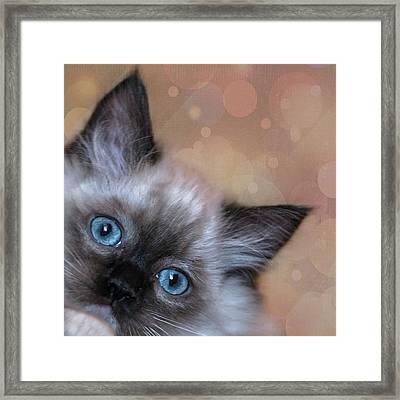 Peek-a-boo 2 Framed Print