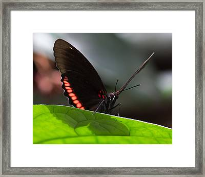 Peek-a-boo 8x10 Framed Print