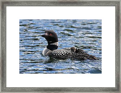 Peek A Boo Baby Loon Framed Print