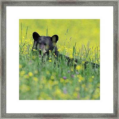 Peek A Boo Bear Square Framed Print by Bill Wakeley