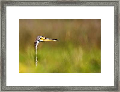 Framed Print featuring the photograph Peek-a-boo Birdie by Bob Decker