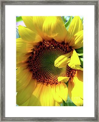 Peek-a-boo Framed Print by Christine Belt