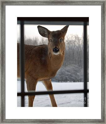 Peek A Boo Framed Print by Diane E Berry