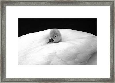 Framed Print featuring the photograph Peek A Boo by Elsa Marie Santoro