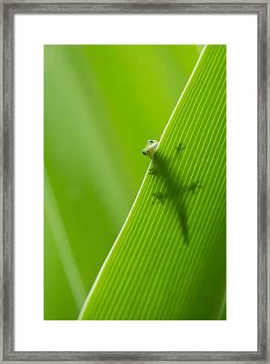 Peek A Boo Gecko Framed Print by Christina Lihani