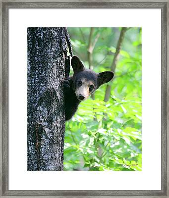 Framed Print featuring the photograph Peek-a-boo by Gerry Sibell