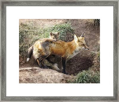 Peek-a-boo, I See You 2 Framed Print by LeAnne Perry