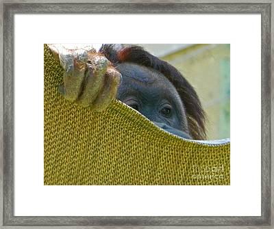 Peek-a-boo I See You Framed Print by Emmy Marie Vickers