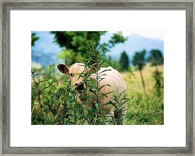 Peek A Boo Framed Print by Jan Amiss Photography
