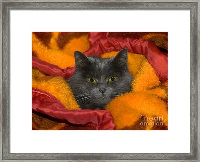 Peek A Boo Framed Print by Joann Vitali