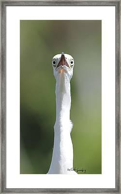 Peek-a-boo Framed Print by Keith Lovejoy