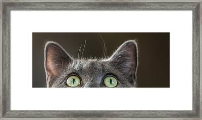 Peek-a-boo Framed Print by Maggie Terlecki