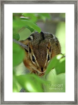 Peek A Boo Framed Print by Marle Nopardi
