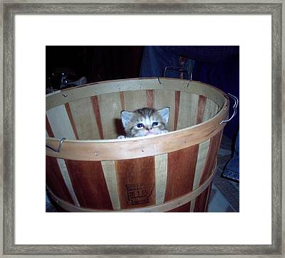 Peek A Boo Framed Print by Martha Hoskins