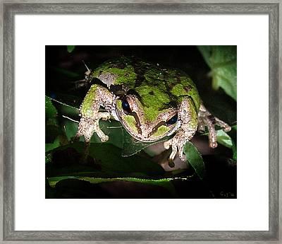 Peek A Boo Pacific Tree Frog Framed Print