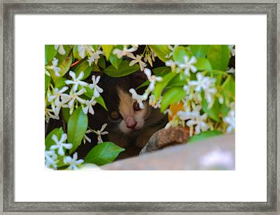 Framed Print featuring the photograph Peek-a-boo by Richard Patmore