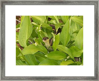 Peek A Boo Framed Print by Rosanne Bartlett