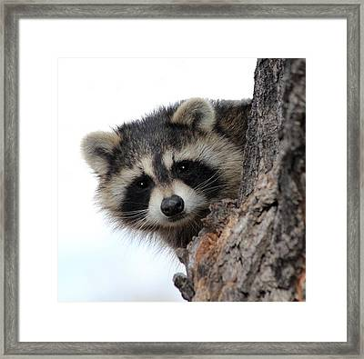 Framed Print featuring the photograph Peek-a-boo by Shane Bechler
