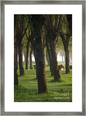 Peek A Cow Framed Print