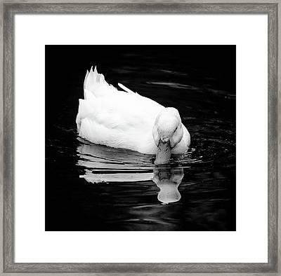 Peek-ing Duck Framed Print