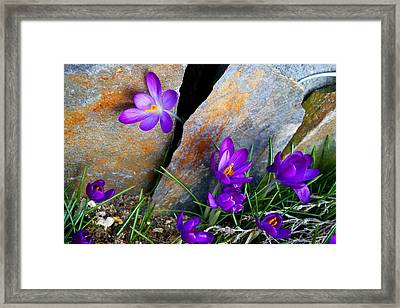 Framed Print featuring the photograph Peek by Kathryn Meyer