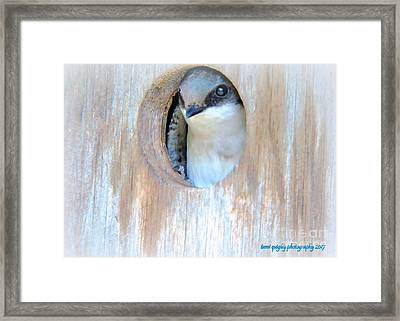 Peek Of Blue  Framed Print