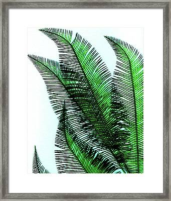 Peek Framed Print by Slade Roberts