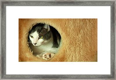 Peekaboo Framed Print by Mandy Wiltse