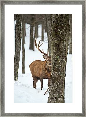 Framed Print featuring the photograph Peekaboo.. by Nina Stavlund