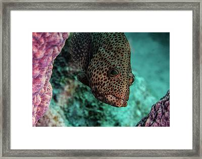 Peeking Coney Framed Print by Jean Noren