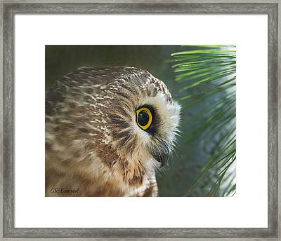 Peeking Out Framed Print by CR  Courson