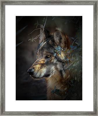 Peeking Out From The Shadows Framed Print
