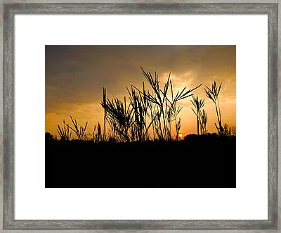 Peeking Out Framed Print by Tim Good